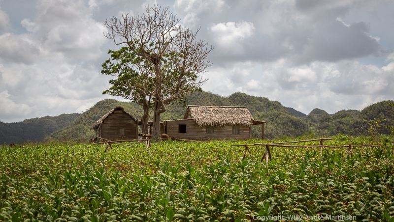 Tobakksfarm