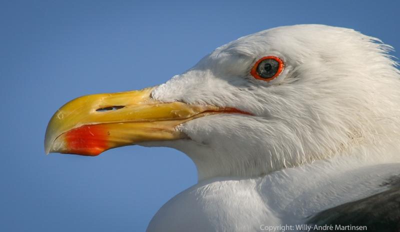 En god forvaltning av havet og kystlandskapet gir gode levekår for alle arter.